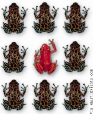 Can You Spot The Duplicate Content in theses Duplicate Frogs?